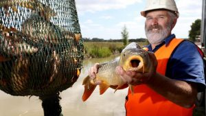 Keith Bell, Carp Expert, Government Consultant with Net